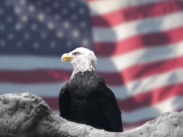 America the beautiful - le pass des parc nationaux américain