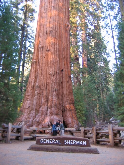 General Sherman plus grand séquoia du monde