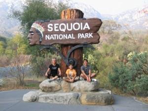 Parc séquoia Californie