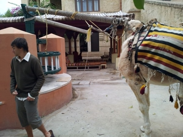 Chameau-tunisie-boude