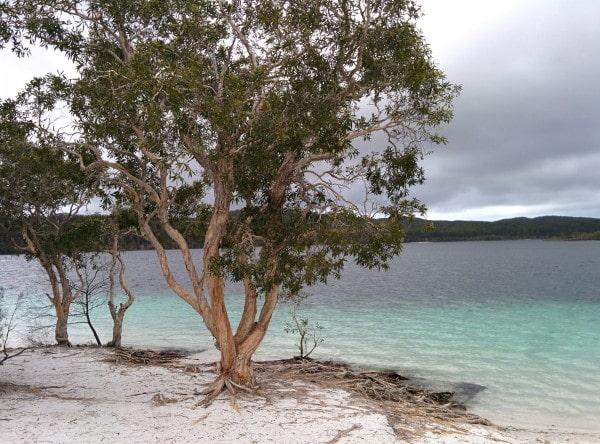Fraser island lac mckenzie australie