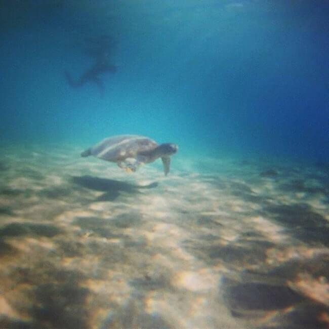 scuba-diving-turtle-airlie-beach-min