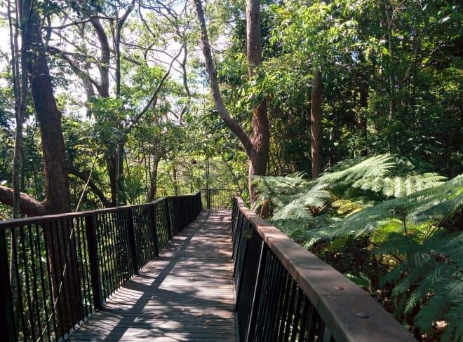 Chemin vers Barron Falls