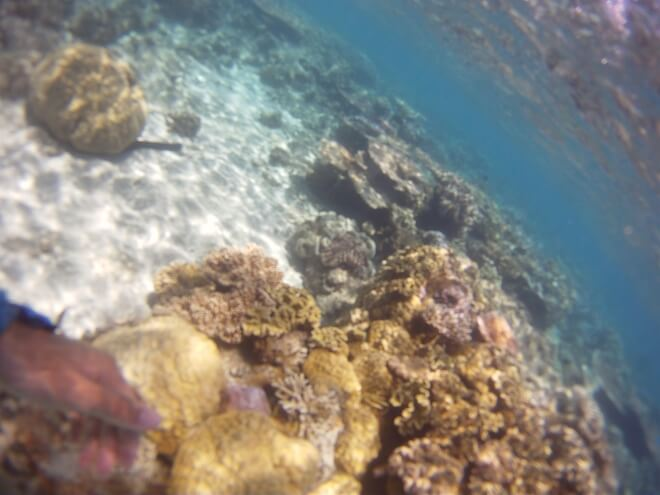 La grande barriére de corail